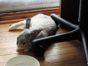 1407ウサギは写る
