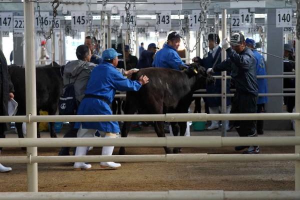 1510牛を押すセリ場にて