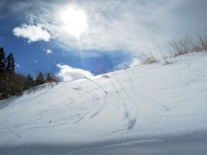 1404大雪の日の庭