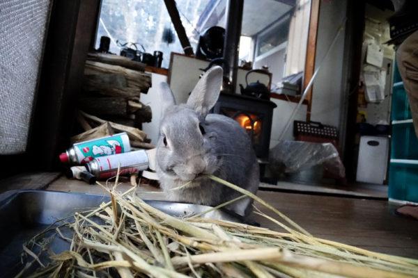 1901RX0ウサギ