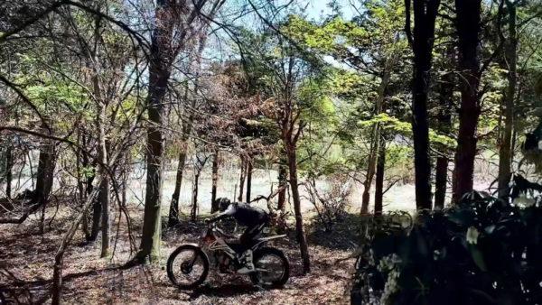 ヒロミさんの森